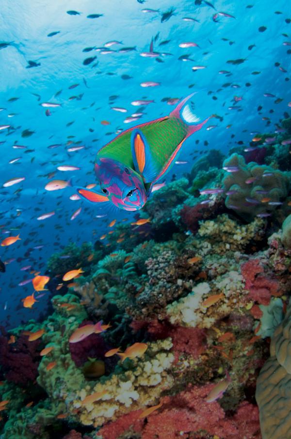 Beqa Island Fiji  city images : Fiji Beqa Island Trip | Underwater Sports