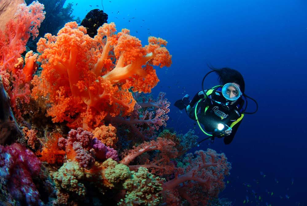 Scuba diving coral reef wallpaper