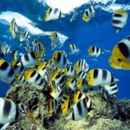 Galapagos Island Trip - Yellow Fish