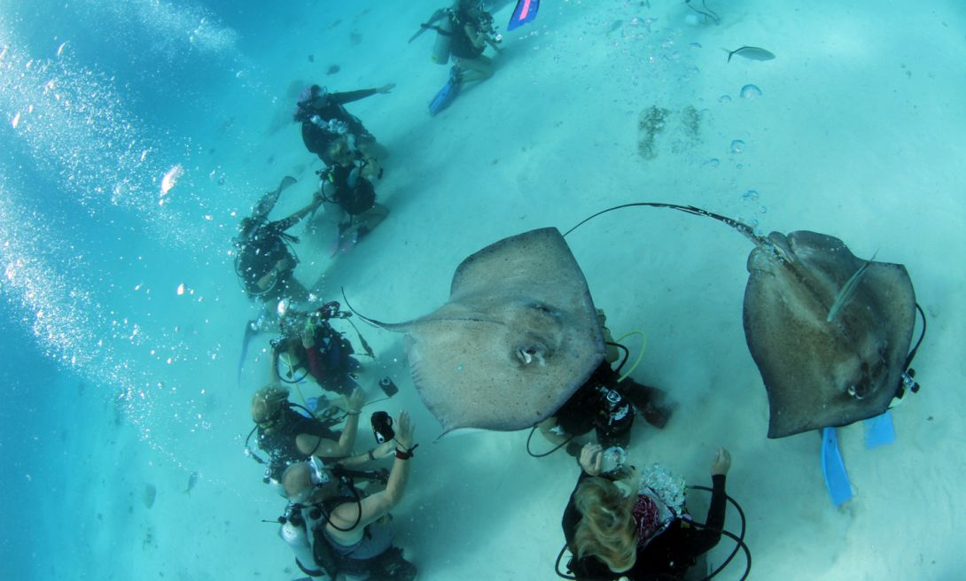 Sting Ray City!